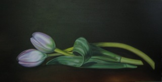 Reposed Tulips
